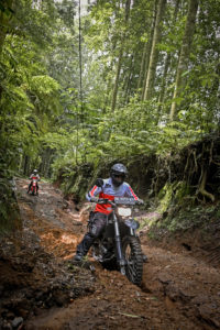 forest ride