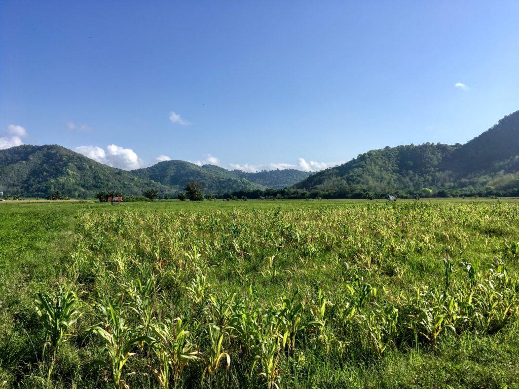 rice fields near Dompu