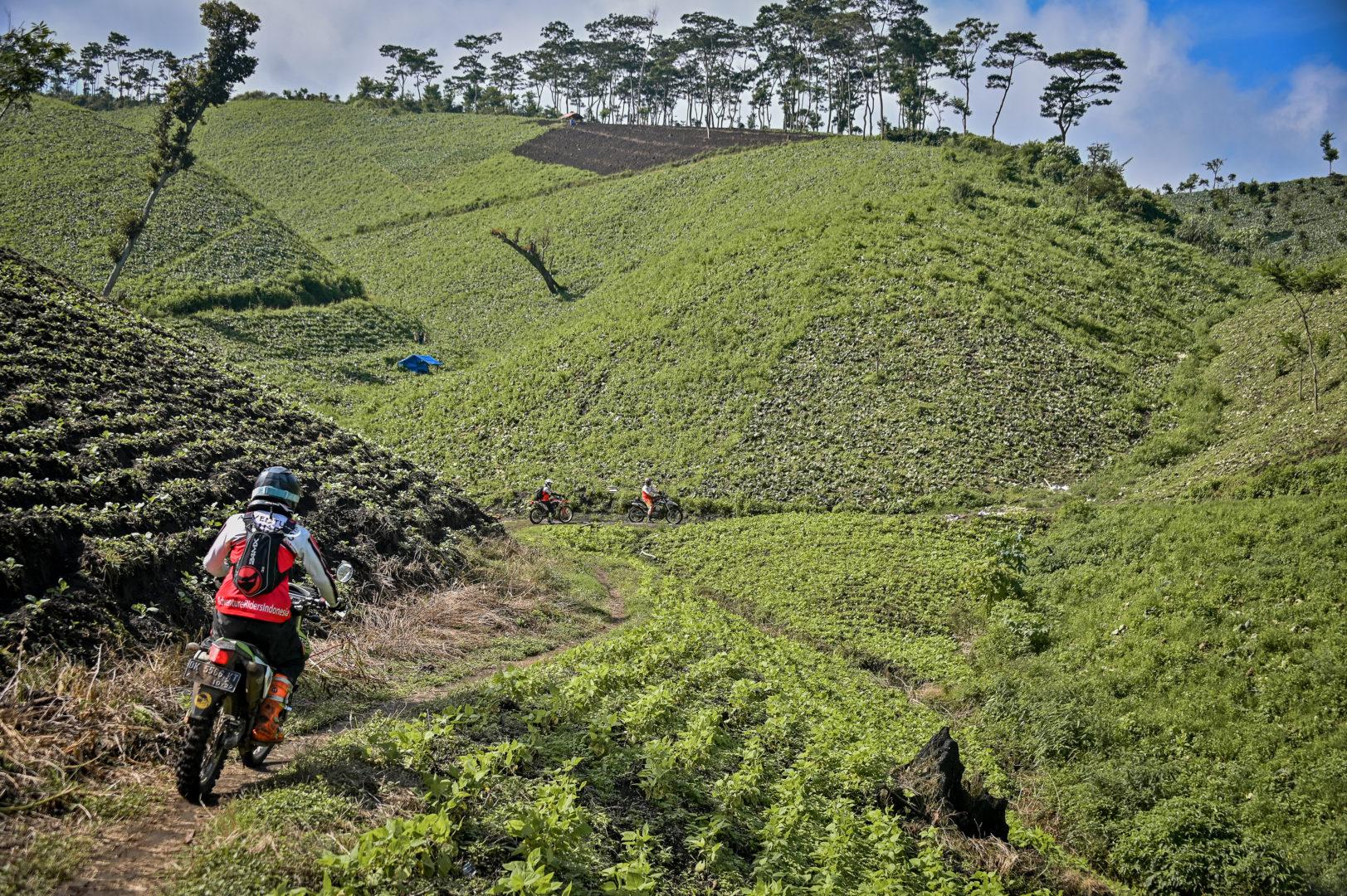 Javanese Farmers