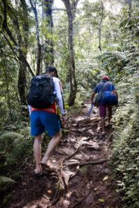 Rainforest trekking in Flores & Komodo