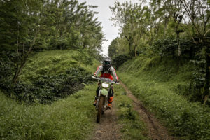 East Java's coffee plantations