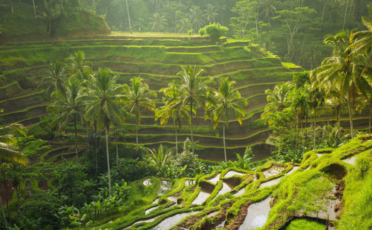 Tegallalang Rice Fields in Bali